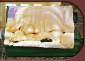 Sleeping Puppy Fleece Blanket Throw