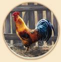 Barred Rock Rooster Farm Life Coaster Set of 8