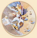 Beach Seashells Coastal Coaster Set of 8
