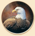 Bald Eagle Birds Coaster Set of 8