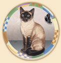 Country Cats 4 Patterns Dogs - Cats Coaster Set of 8