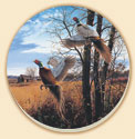 A Wildlife Birds Coaster Set of 8 - Evening Flight