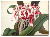 4 CorkBack Hardboard Table-Placemats Red Floral Crinum